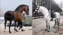 Cute And funny horse Videos Compilation cute moment of the horses - Cutest Horse 1