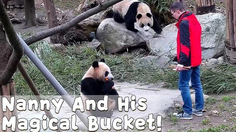 Nanny's Magical Bucket Has Everything! | iPanda