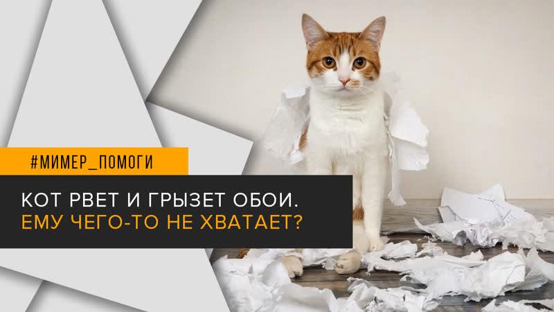 Ответ ветеринара Кот дерет обои Ему что то не хватает