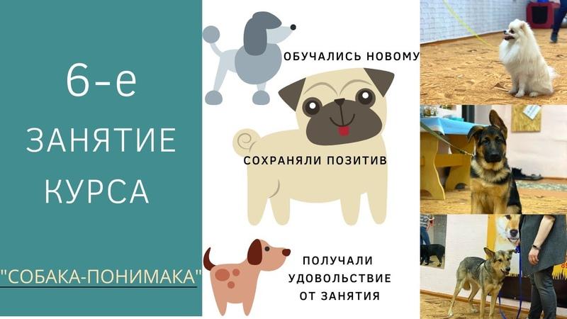 6 е занятие курса Собака понимака