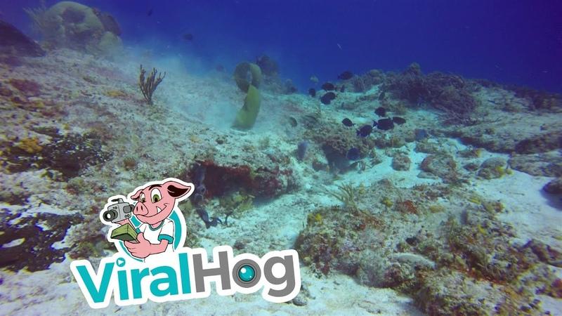 Moray Eel Works for Meal in Cozumel's Waters ViralHog