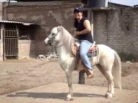 Ponyboy on a PONy LoL