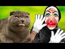 Пранк над котом - большая маска Монстра