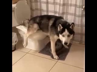 Современные собаки ходят не в лоток