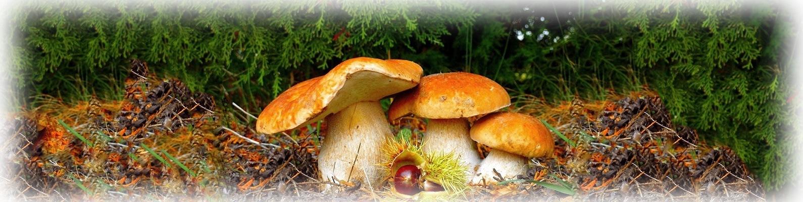 грибы самарской обл в контакте