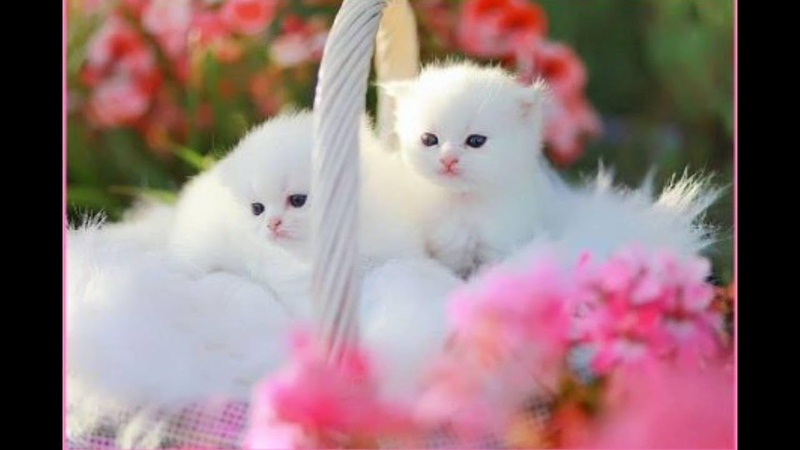 Super cute kittens Episode 13 Cute Kittens Playing Naughty Beautiful Kittens In The World