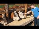 Мясная продукция холдинга Афанасий