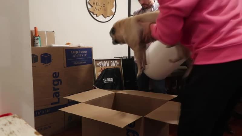 Как Веня помогает с переездом