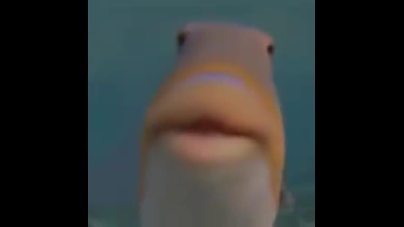Fish blobs