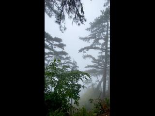 Видео от Надежды Соловьевой