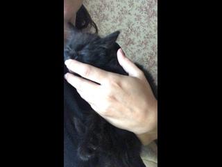 Mariya Lapuşkinatan video
