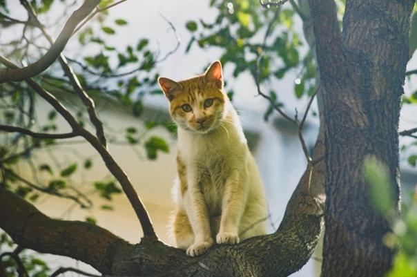 А ваши котики предсказывают будущее Мы сидели на берёзе. Все наши тут были: и Васька, и Беляк, и Алиска, и Барсик. Ещё пятеро пришли с соседнего двора. Прохожие показывали пальцем: мол, ха,