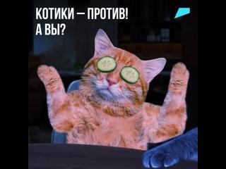 Котики — против, а вы?