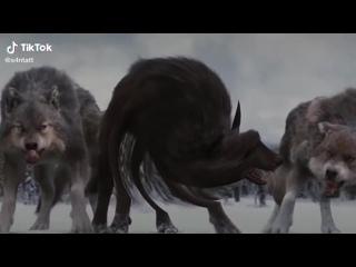волк не волк но волк это волк ауф