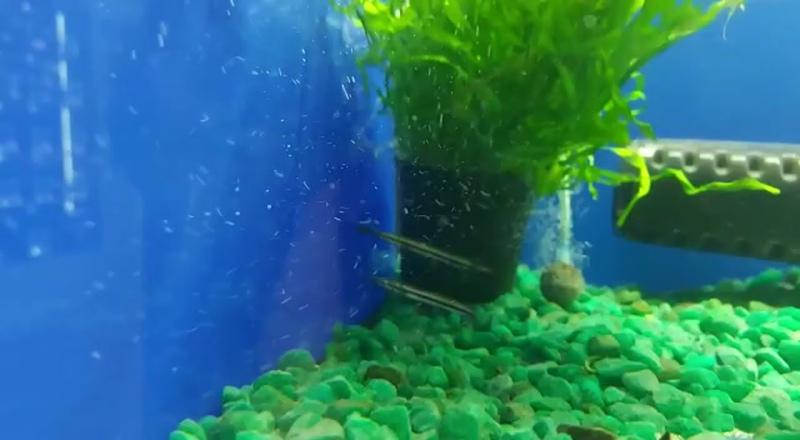 Видео от Зоомагазин Фауна в Старом Осколе