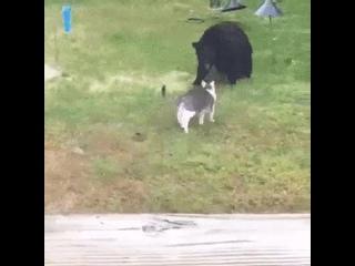 Осторожно злая собака, а кот вообще псих 😃