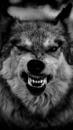Личный фотоальбом Кати Волк