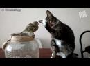 Приколы про кошек жгут орево