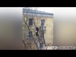 Бесстрашный парень снимает кота с высокого дерева