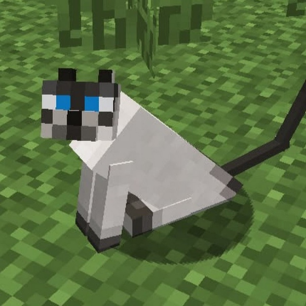 как кота в майнкрафт #4