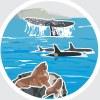 """Группа помощи морским животным """"Друзья Океана"""""""