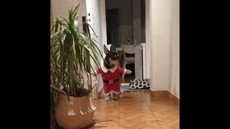 Помощник Санта Клауса