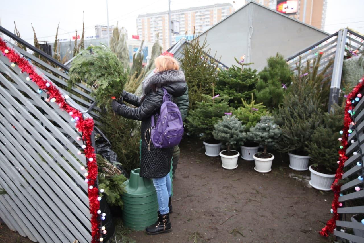 Пункты по сбору новогодних елок откроются в Нижегородском. Роман Балаев. Местные новости