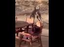 Кенгуру подрались хорошее настроение, юмор, смешное любительское видео, звери, животные, бытовая драка, ссора, бокс, Австралия