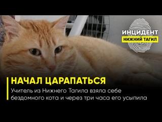 Начал царапаться: Учитель из Нижнего Тагила взяла себе бездомного кота и уже через три часа его усыпила