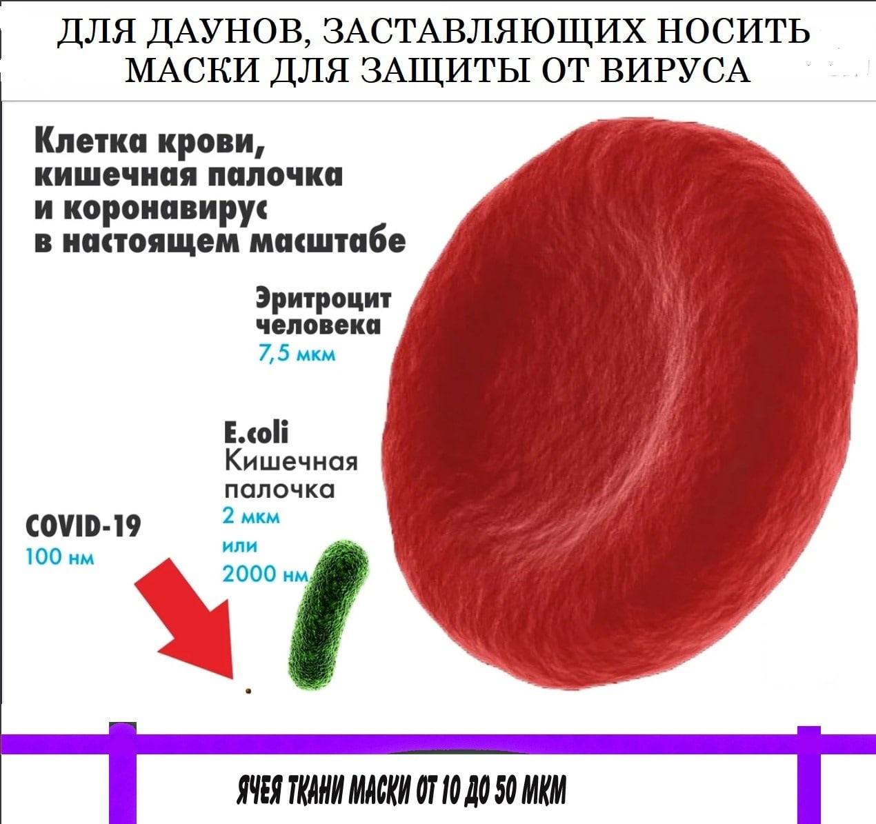 Секта СВИДЕТЕЛЕЙ КОРОНАВИРУСА 61222