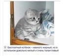 Александр Гвинский фотография #28