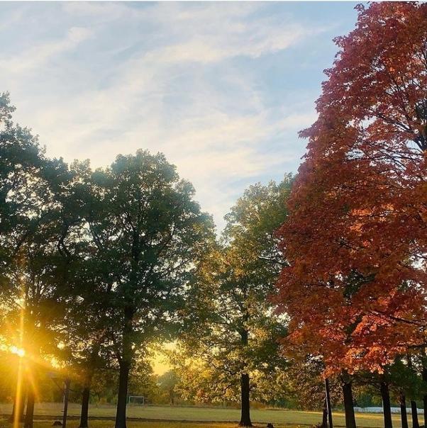 Золотая осень золотаяЗа фото благодарим utkinaluiz...
