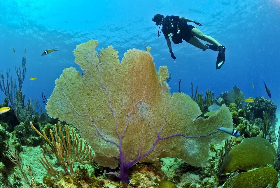 море аквалангист