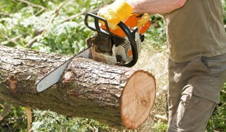 В Можге спилят аварийные деревьяСейчас убрали уже
