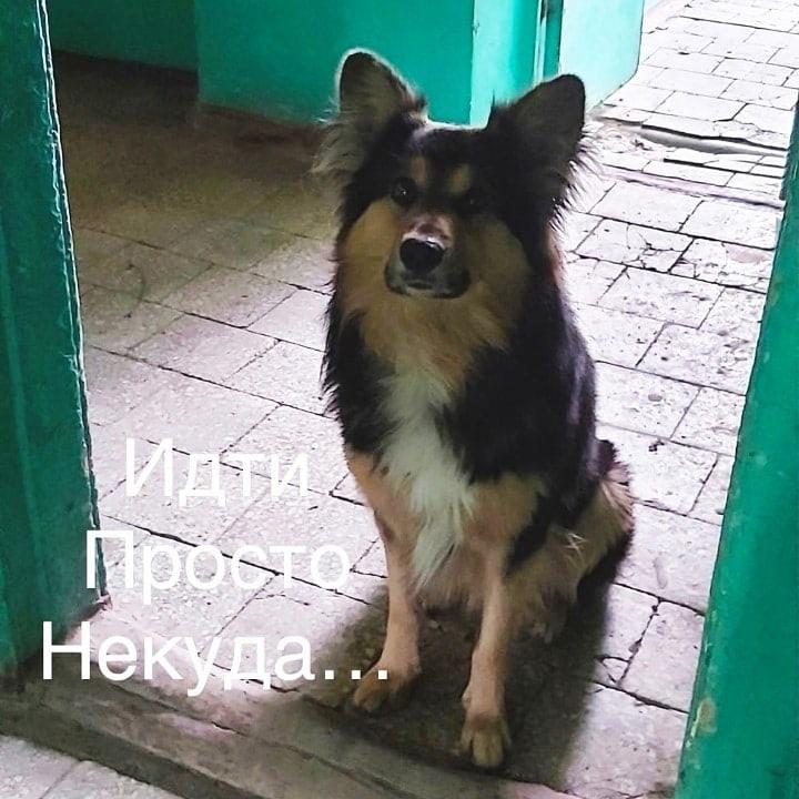 1. Хозяин уехал и выставил собаку 😞😞😞Собака лежит возле квартиры ....Соседи сказали ее завезут ....