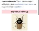 Майор Андрей | Санкт-Петербург | 29
