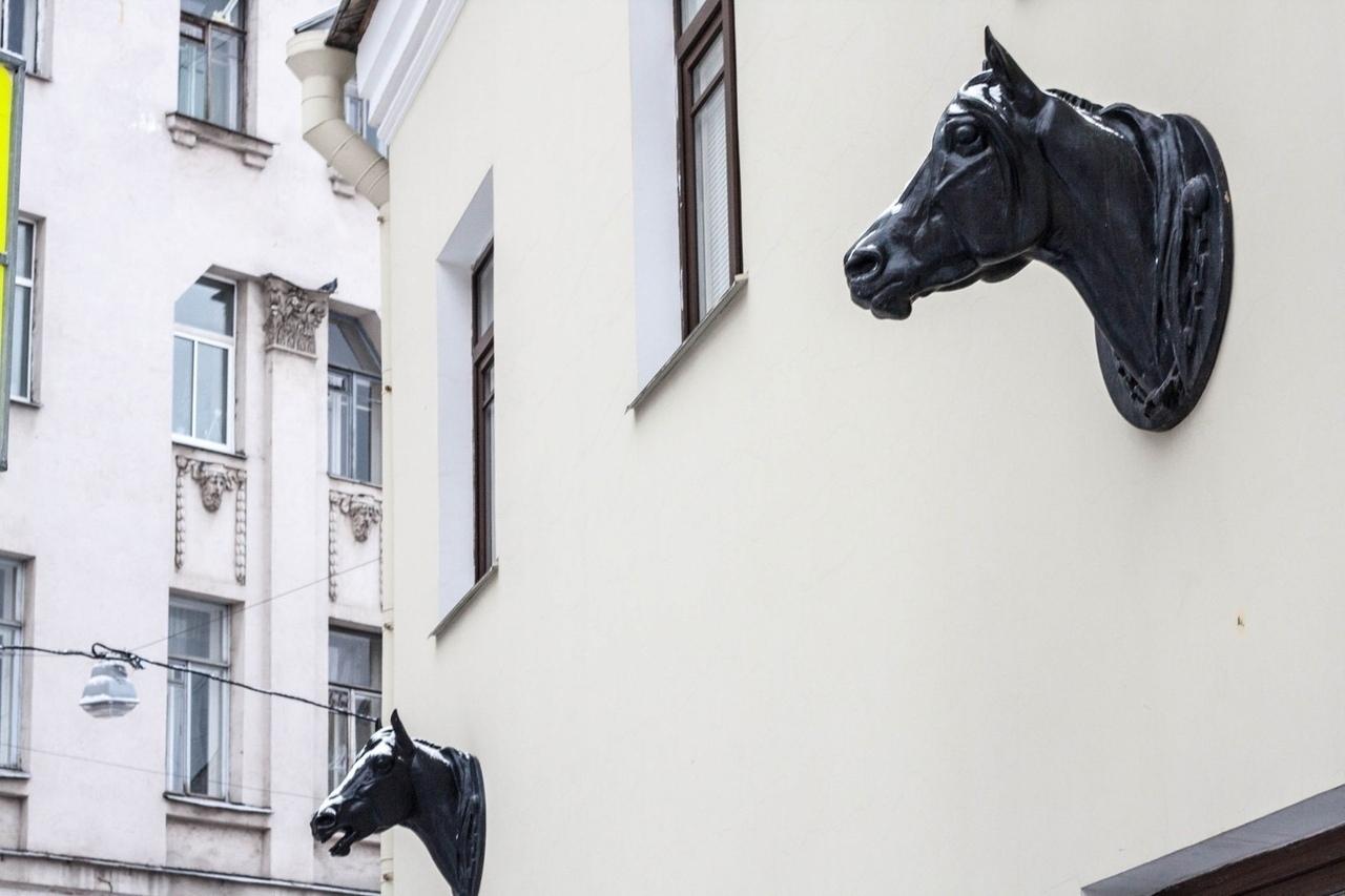 В Питере есть дом из которого растёт голова лошади