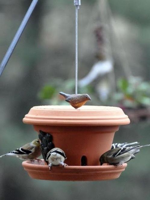 простые кормушки для птиц фото,