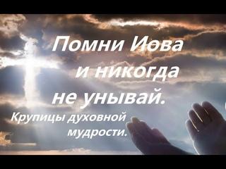 Помни Иова и никогда не унывай. Духовные зернышки. Советы Митрополита Владимира Тихоницкого.