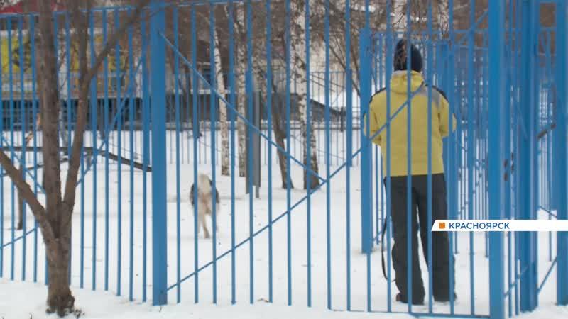 Собачье дело как помирить собачников и соседей по двору