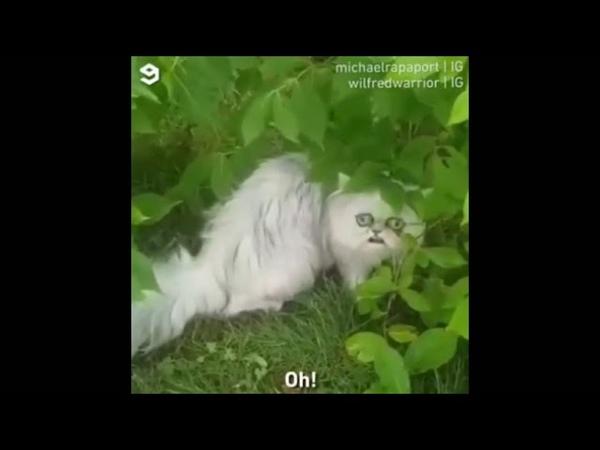 Странный кот все видео