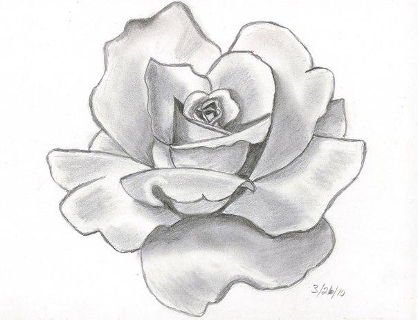 drawings of flowers - HD1600×1268