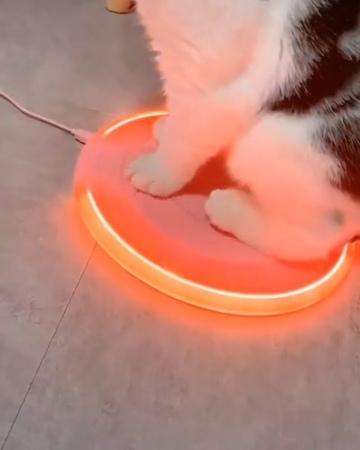 Cute Cats Kittens on Instagram: