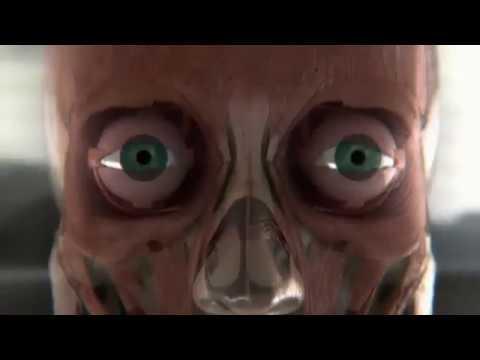 Тело человека Грани возможного Зрение