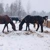 """Конюшня """"Старая ферма"""" (89095717429)"""
