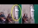「面白い動物」あり得ないことをする犬, 猫・おもしろ犬, 猫のハプニング, 失敗集 550