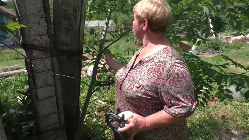 Борьба с кустарником на участке без затрат