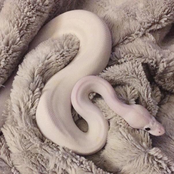картинки тумблер змеи было