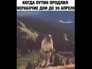Когда Путин объявил карантин до мая