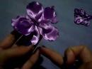 Florde cerejeira